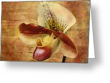The Lady Slipper Orchid Greeting Card