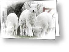 the Lamb is watching Greeting Card