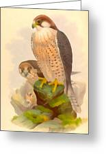 The Lanner Falcon Greeting Card
