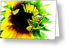 The Largest Sunflower In The Garden Summer Of 2013 Greeting Card