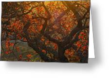 The Last Leaves On The Tree Greeting Card by Rebecca Cearley