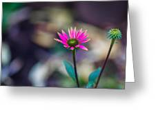The Last Of Summer - Featured 3 Greeting Card