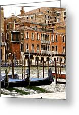 The Last Pigeon In Venice Greeting Card