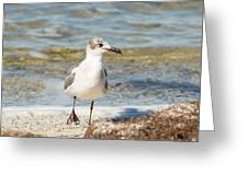 The Laughing Gull Strut Greeting Card