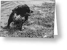 The Laughing Springer Greeting Card