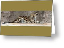 The Leopard Greeting Card
