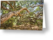 The Life Of Oaks - The Magical Trees Of The Los Osos Oak Reserve Greeting Card