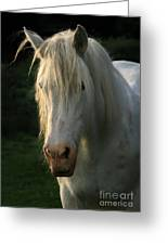 The Light In The Mane Greeting Card