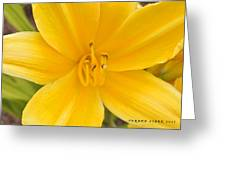 The Lily From Kentucky Greeting Card