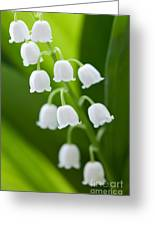 The Lily Of The Valley Greeting Card by Boon Mee