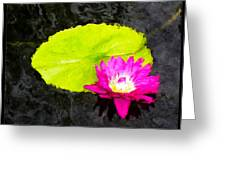 The Lily Pad And Flower... Greeting Card