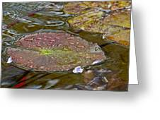 The Lily Pad Greeting Card