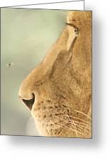 The Lion And The Fly Greeting Card