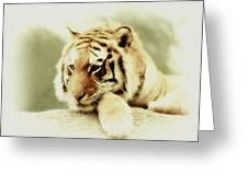 The Lion At Rest Greeting Card