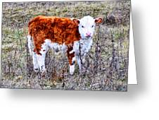 The Little Cow Greeting Card