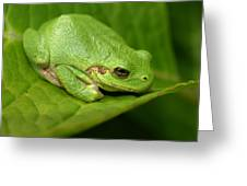 The Little Frog Greeting Card
