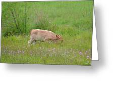 The Little Grazer Greeting Card