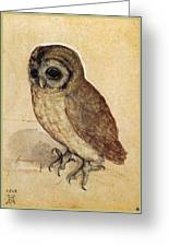 The Little Owl 1508 Greeting Card