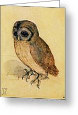 The Little Owl Greeting Card