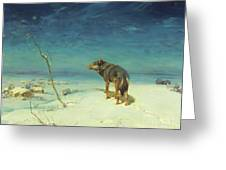 The Lone Wolf Greeting Card by Pg Reproductions
