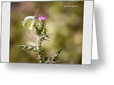 The Lonely Butterfly Greeting Card