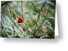 The Lonely Flower Greeting Card