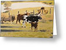 The Longhorn Cows Greeting Card