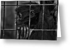 The Look Of Captivity Black And White Greeting Card