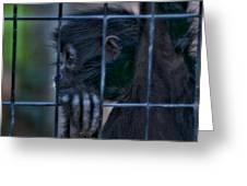 The Look Of Captivity Greeting Card