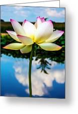 The Lotus Blossom Greeting Card