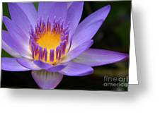 The Lotus Flower - Tropical Flowers Of Hawaii - Nymphaea Stellata Greeting Card