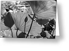 The Lotus Pond Greeting Card