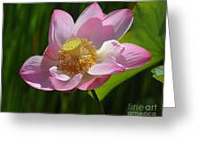 The Lotus Greeting Card