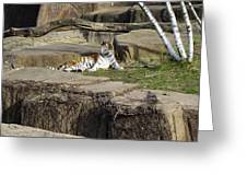 The Lounging Tiger 2 Greeting Card