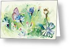 The Love Between Butterfly And Chicory Greeting Card
