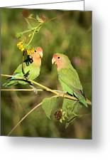 The Lovebirds  Greeting Card