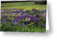 The Lupine Field Greeting Card