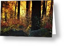 The Magic Of The Forest  Greeting Card