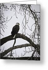 The Majestic Eagle Greeting Card