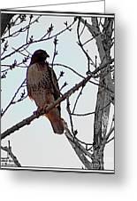 The Majestic Hawk Greeting Card