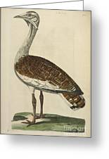 The Male Bustard Greeting Card