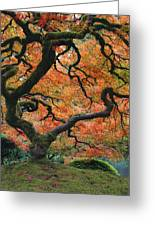 The Maple Tree At Portland Japanese Garden Greeting Card