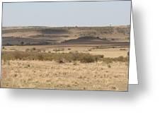 The Mara Plains Greeting Card