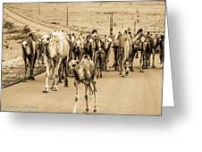 The March Of The Camels Greeting Card