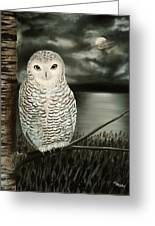 The Marsh At Night Greeting Card