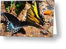 The Meeting Of The Butterflies Greeting Card