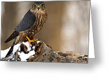 The Merlin Greeting Card