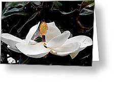 New Orleans Metamorphous Of The Southern Magnolia Spring Equinox In Louisiana Greeting Card