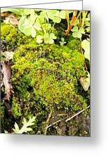 The Miniature World Of The Moss Greeting Card