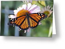 The Monarch Landed Greeting Card